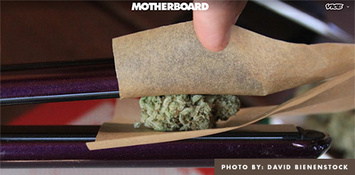Straightener with Cannabis