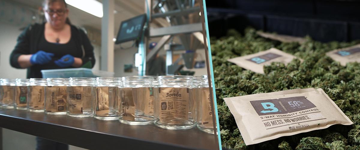 Boveda and cannabis at Nectar.