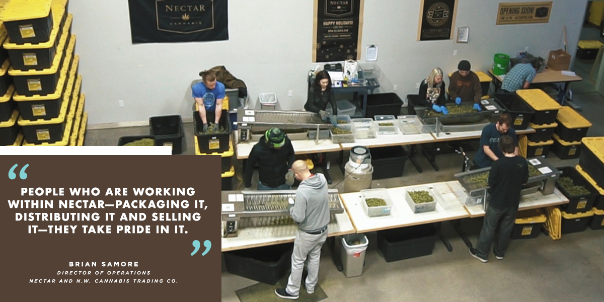 Nectar employees working with cannabis.