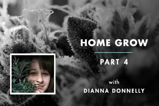Home Grow 4: Root Bound Ladies