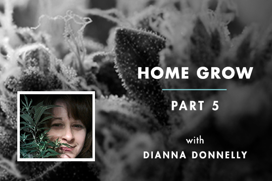 Home Grow 5: Topping & Cloning