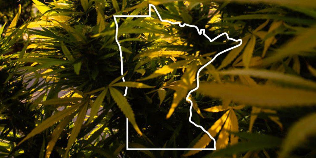 MN Cannabis State