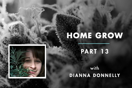 Home Grow 13: Wet Trimmer Turns Dry Trimmer, Here's Why