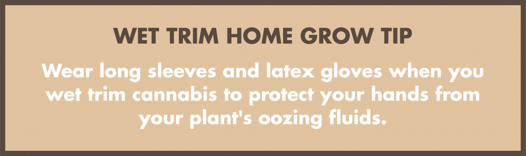 Wear long sleeves and latex gloves when you wet trim cannabis to protect your hands from your plant's oozing fluids.