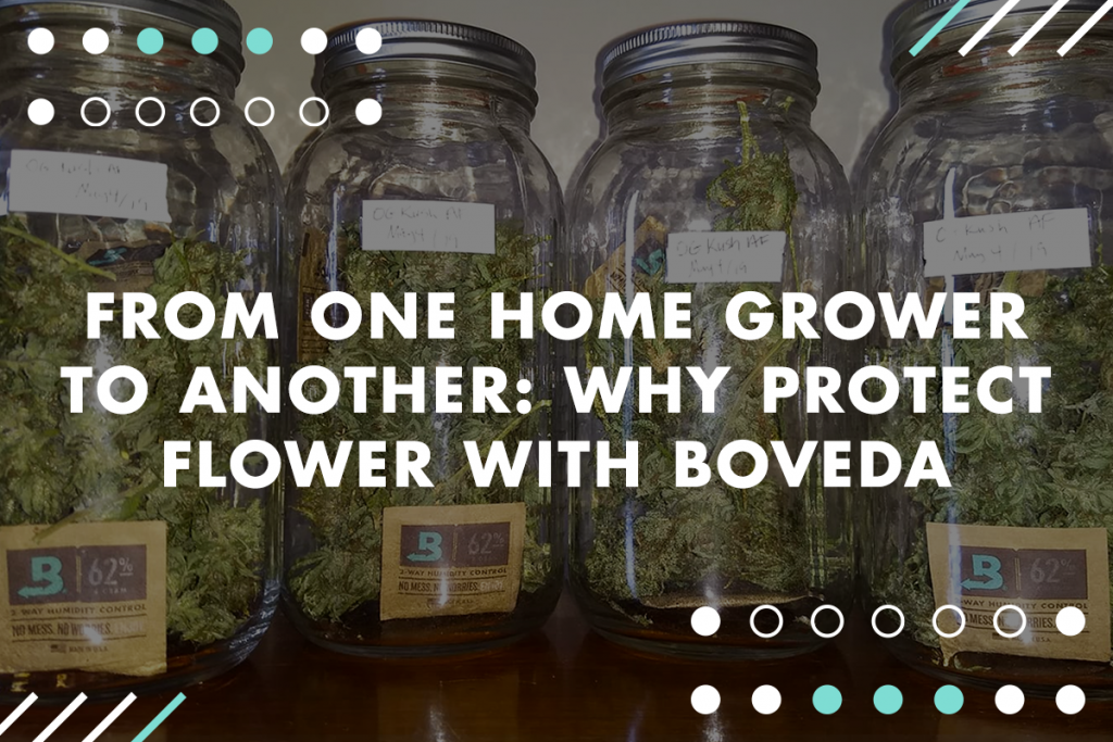 How to store cannabis with Boveda, the most effective humidity packet.