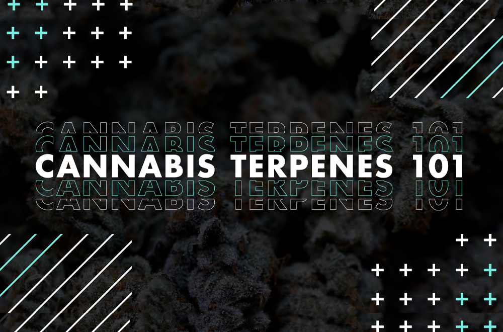 learn what are terpenes and why terpenes need a terpene shield