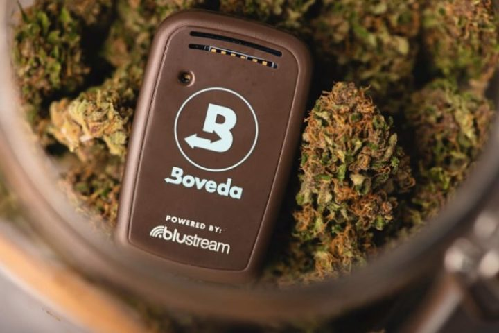 Boveda Butler in jar of cannabis