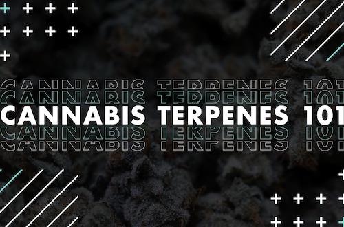 Terpenes 101
