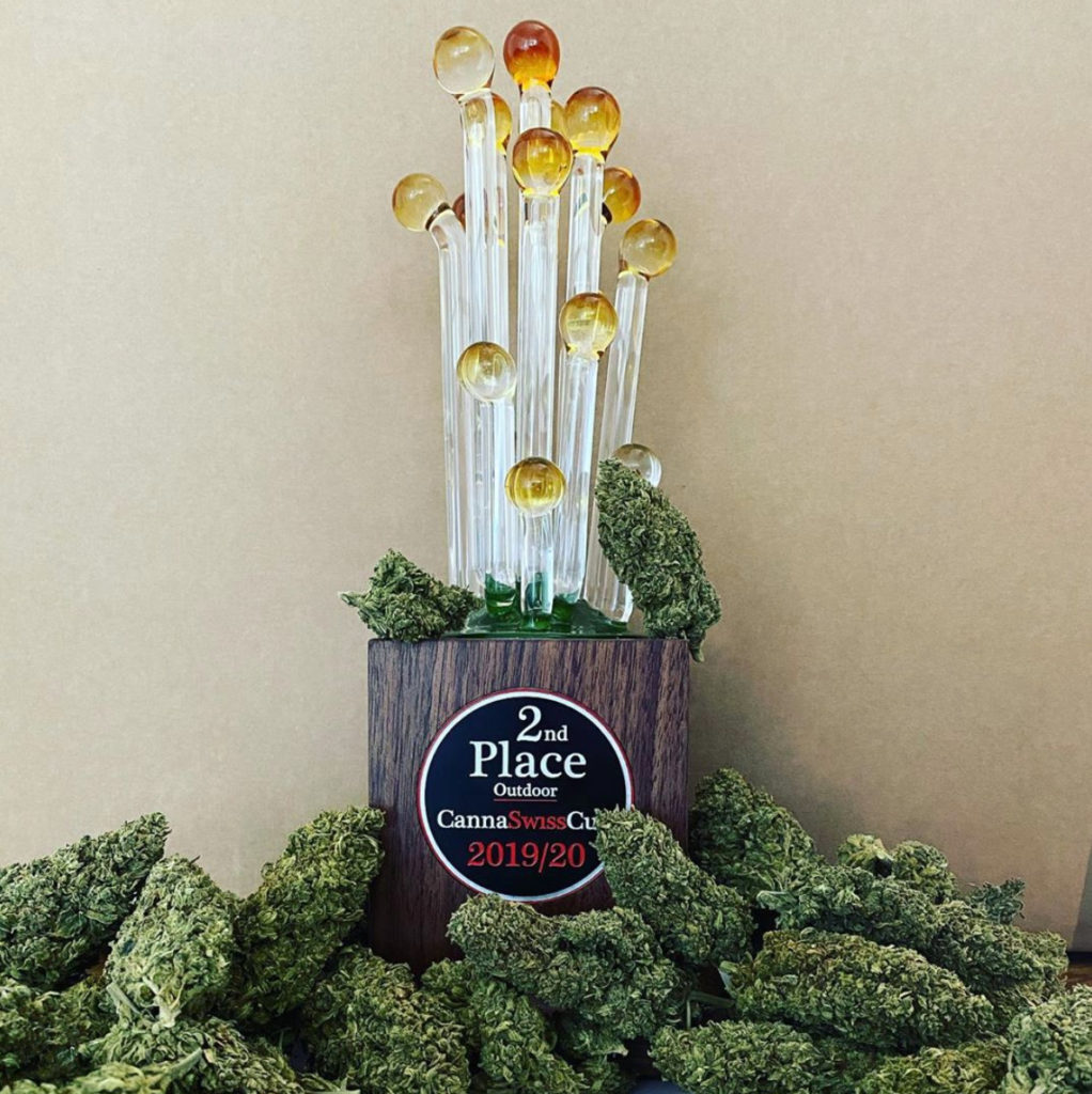 Save the terps, win the awards! Preserving the aroma, flavor and effects of Grünkraft's Harlequin CBD with a terp shield earned the grower a CannaSwiss Cup.
