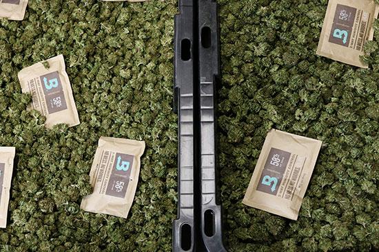 boveda packs in large cannabis bin