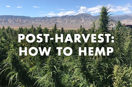 Will Hemp Beget Legal Rec?