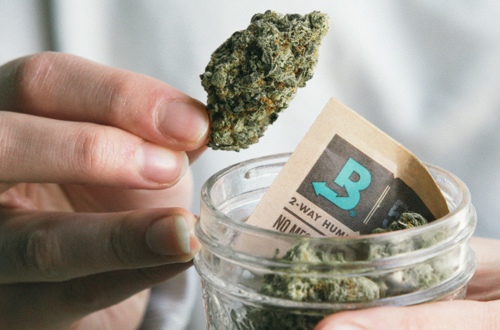 I Took the Boveda Challenge and Here's What I Learned about Cannabis