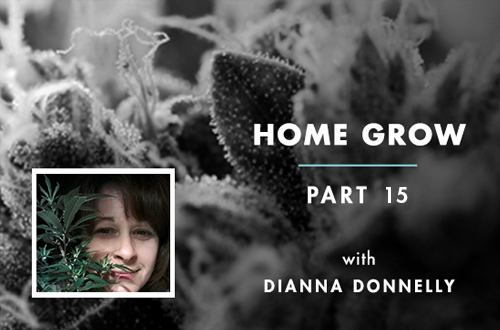 Home Grow 15: How to Store Cannabis Medicine