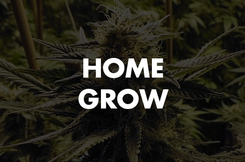 Home Grow 14: How To Save the Terps While You Cure